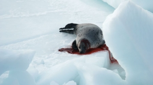 Proud Canadian Celebs Blast Canada's Seal Slaughter