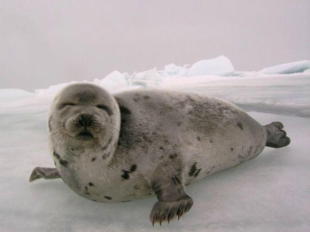Seal Sea Shepherd