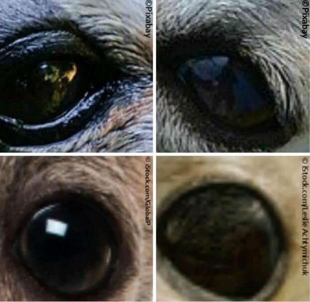 Dog and Seal Pup Eyes