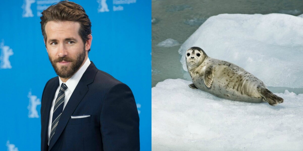 Ryan Reynolds narrates film about seal slaughter