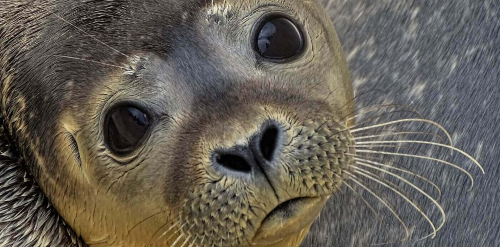 8 Things You Need to Know About Canada's Seal Slaughter